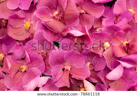 Pink orchid background - stock photo