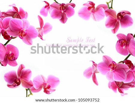 Pink orchid flowers isolated over white with copyspace - stock photo