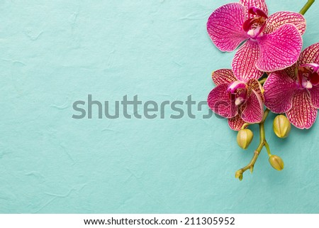 Pink orchid flowers on a pastel background. Pink orchid background. - stock photo