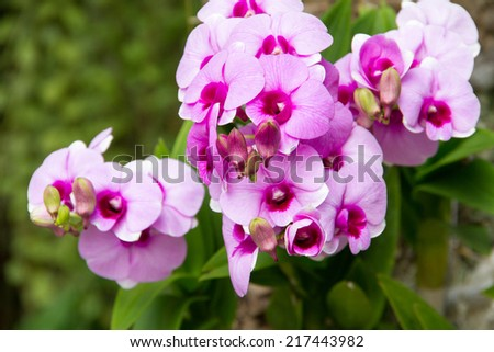 Pink Orchid In Orchids Garden