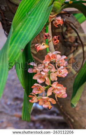Pink orchid in Thailand - stock photo
