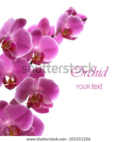 Pink orchid isolated on a white background - stock photo