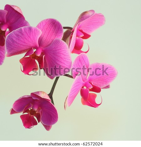 Pink orchid on a bright background, 2 - stock photo