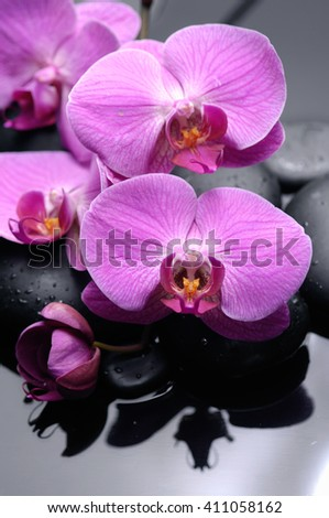 pink orchid on black stones reflection  - stock photo
