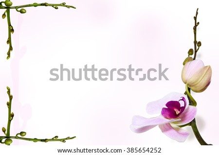 Pink orchid on tender rosy tint background on stem backdrop with free space for text. Orchid stems in the left corners.