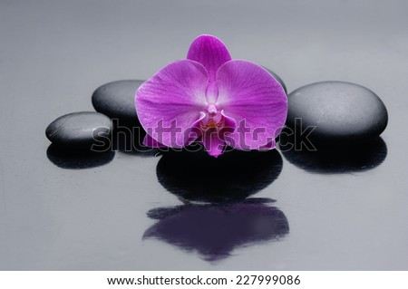 pink orchid on zen stones - stock photo