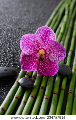 Pink orchid with black stones on bamboo grove on wet background - stock photo