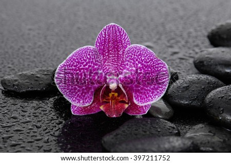 pink orchid with pebbles on wet background - stock photo