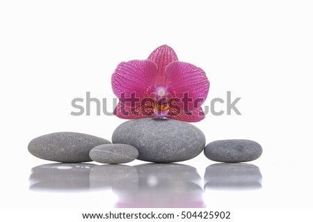 pink orchid with set of gray stones