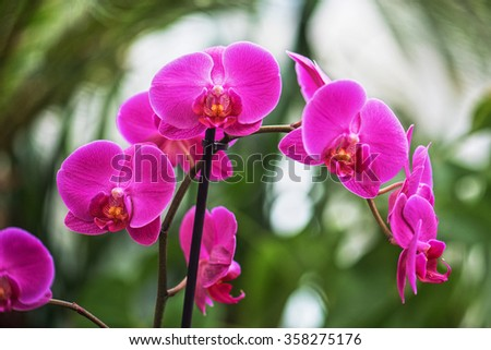 pink orchids at botanical garden