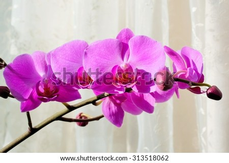Pink orchids on beige background - stock photo