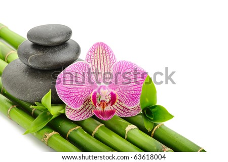 Pink orhid and stones on the bamboo grove - stock photo