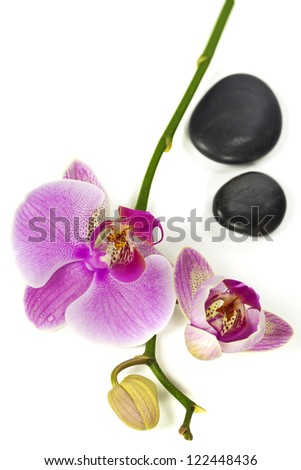 Pink orhid and Zen pebbles - stock photo