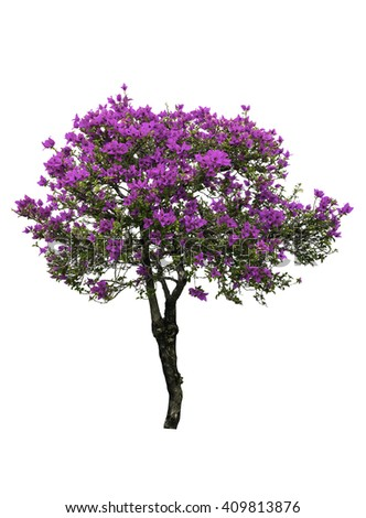 Pink paper flower tree isolated on white