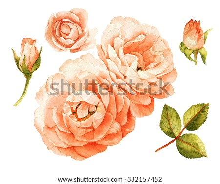 Pink-peach roses watercolor elements - stock photo
