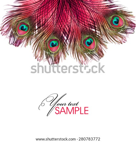 Pink peacock - stock photo