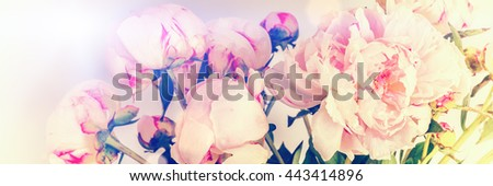 Pink peonies on pastel background with copyspace. Mothers day concept