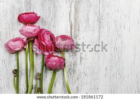 Pink persian buttercup flowers (ranunculus) on wooden background. Copy space, your text here. - stock photo