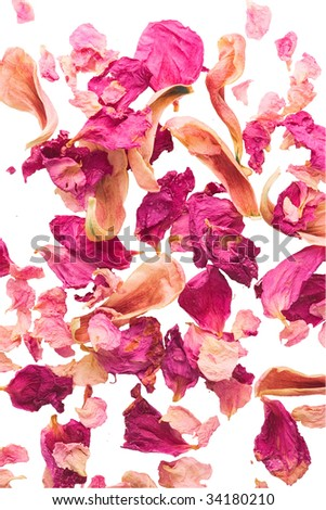 pink petals over white - stock photo