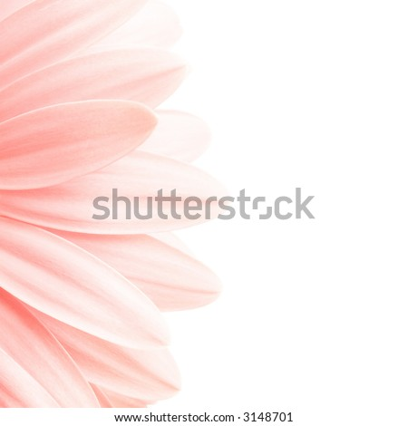 pink petals shot highkey isolated on white, 1:1 ratio crop of 5D image - stock photo