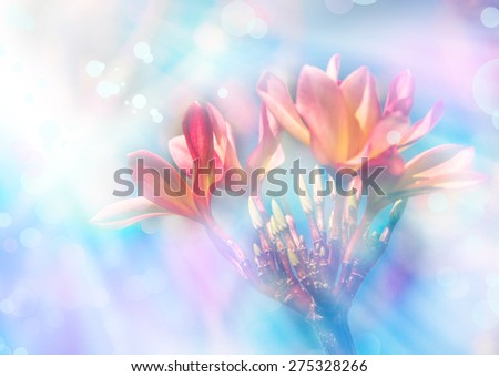 Pink plumeria in front of blue sky, Hawaii, Maui, - stock photo