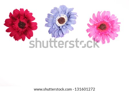 Pink, purple and red daisy flowers over the white background - stock photo