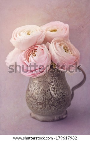 Pink ranunculus flowers on a lilac background - stock photo