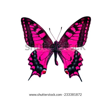 pink red butterfly isolated - stock photo