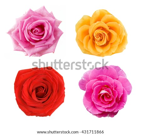 Pink, red, cream and yellow rose set isolated on white background - stock photo
