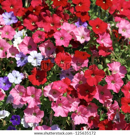 pink, red, white and violet flowers in garden under the sun