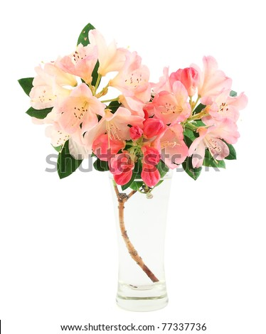 Pink Rhododendrons in a  glass vase - stock photo