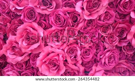 Pink Rose Background. Sweet, Love - stock photo