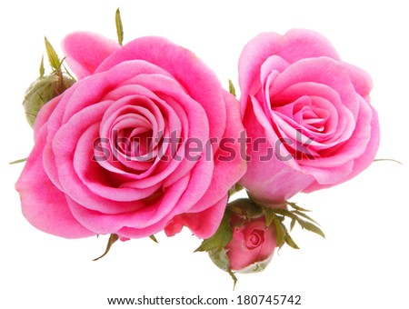 Pink rose flower bouquet isolated on white background cutout - stock photo