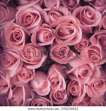 pink rose flower bouquet vintage background - stock photo