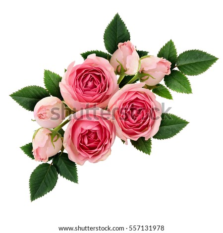 Pink rose flowers arrangement isolated on stok fotoraf telifsiz pink rose flowers arrangement isolated on white mightylinksfo