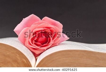 Pink Rose in Between Book Pages