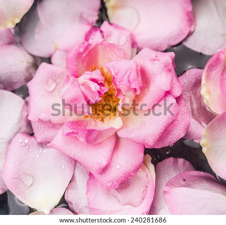 Pink rose in water with drops and petals, top view - stock photo