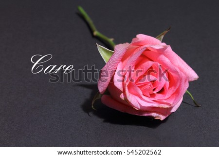 Pink Rose isolated on a black background with the words Care
