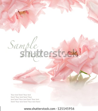 Pink rose on white background, with sample text - stock photo
