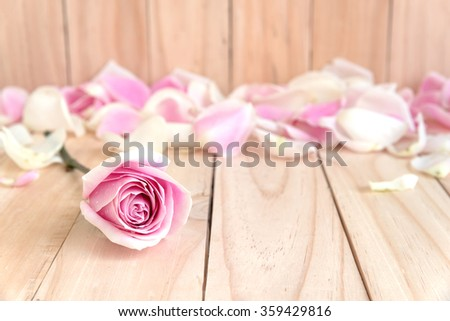 pink roses and petal for love with copy space, beautiful flower, love concept for valentines day, wedding, anniversary, congratulations and birthday  - stock photo