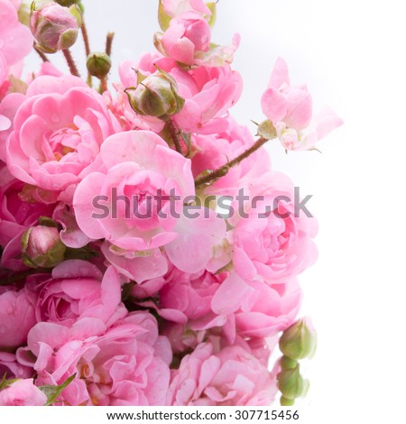 Pink roses bouquet with free space for text, soft focus - stock photo