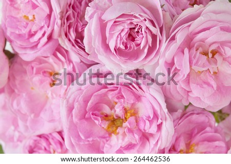 Pink roses bunch background - stock photo