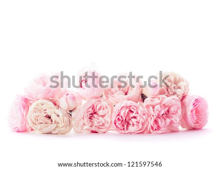 Pink roses bunch closeup in vase on white - stock photo