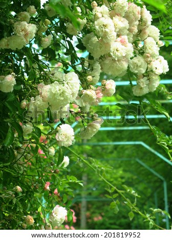 Pink roses flower arches - stock photo