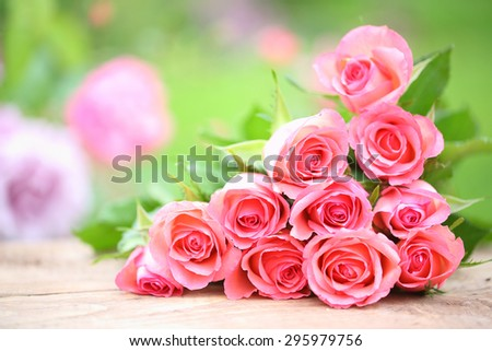 Pink roses in a garden - stock photo
