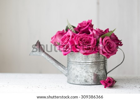 Pink roses in a vintage watering can - stock photo