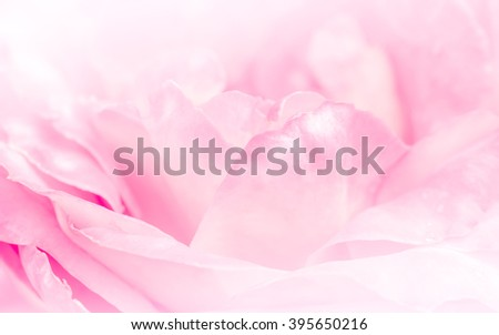 Pink roses in soft pastel color and blur style for background - stock photo