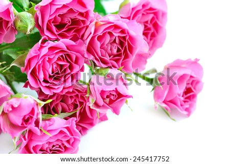 Pink roses isolated on white background - stock photo