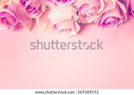Pink roses on pink background.