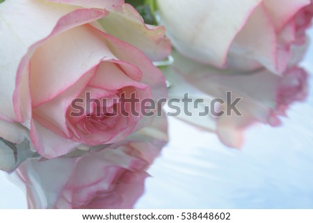 Pink roses on water background